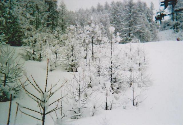 Photos de Hollande et d'ailleurs 197_1321199651_57-ski